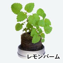 リトルハーブ(ミニ缶入り)(レモンバーム)