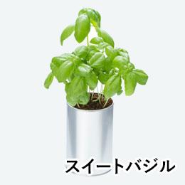 ハーブ&ベジ(缶入り)(スイートバジル)