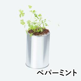 ハーブ&ベジ(缶入り)(ペパーミント)